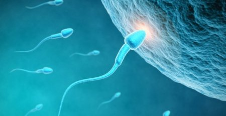 Sterile, Fertility, Male Fertility, Sperm Mapping, FNA Mapping, Testicular Health, Fertility